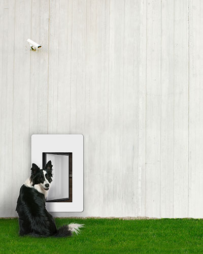 Outside view of petWALK model large in open state installed into a wall with dog